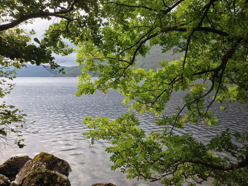 A low viewpoint of Loch Lomond
