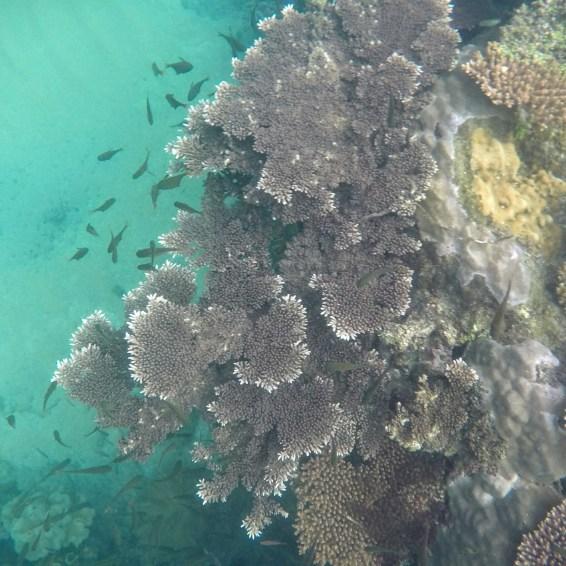 snorkeling coraux tioman