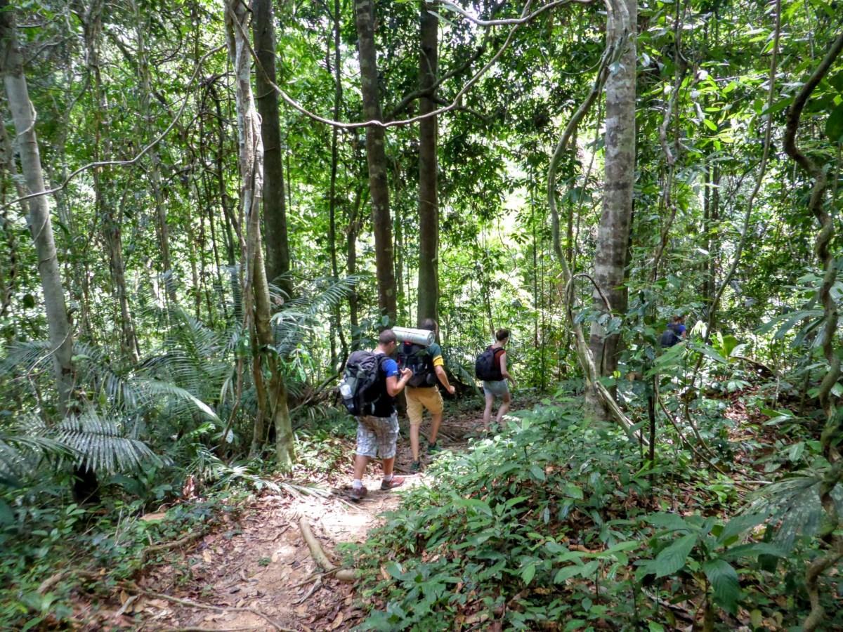 Vis ma vie d'aventurier à Taman Negara