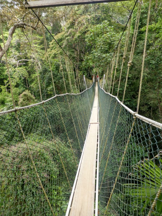 taman negara canopy walkway