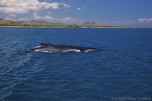 baleine sur les côtes de madagascar