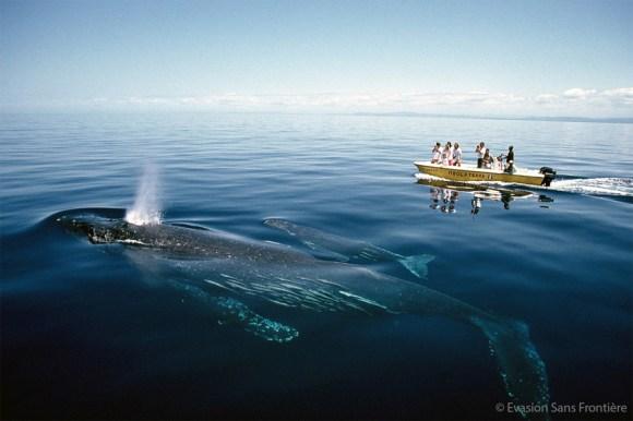 Voir les baleines à madagascar_sécurité
