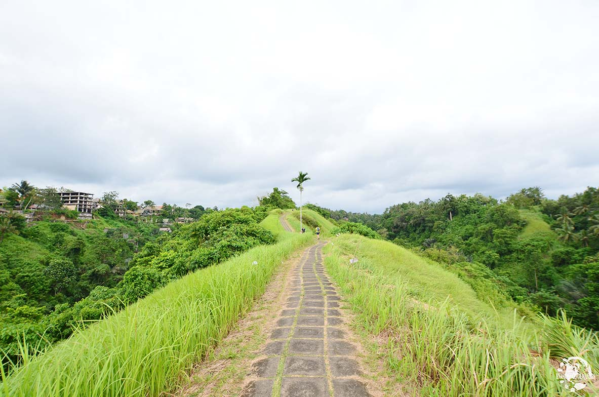 Campuhan Ridge Walk