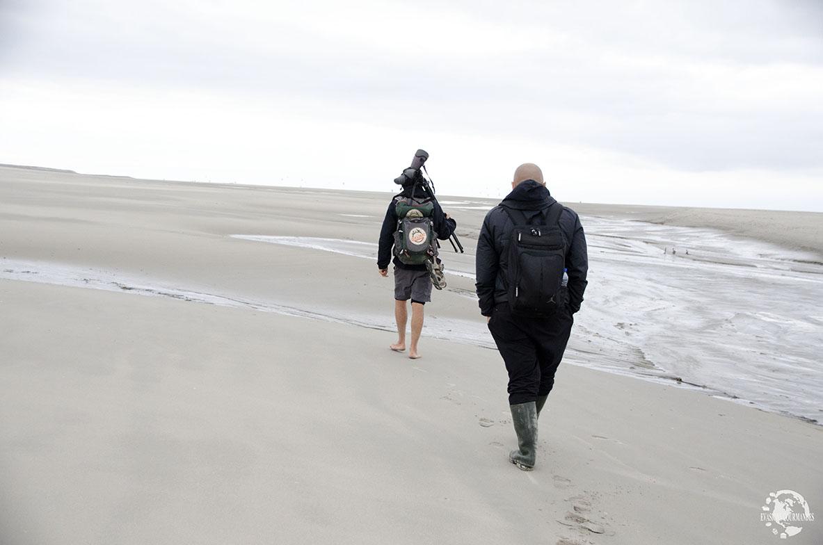 Observation de phoques Baie de Somme