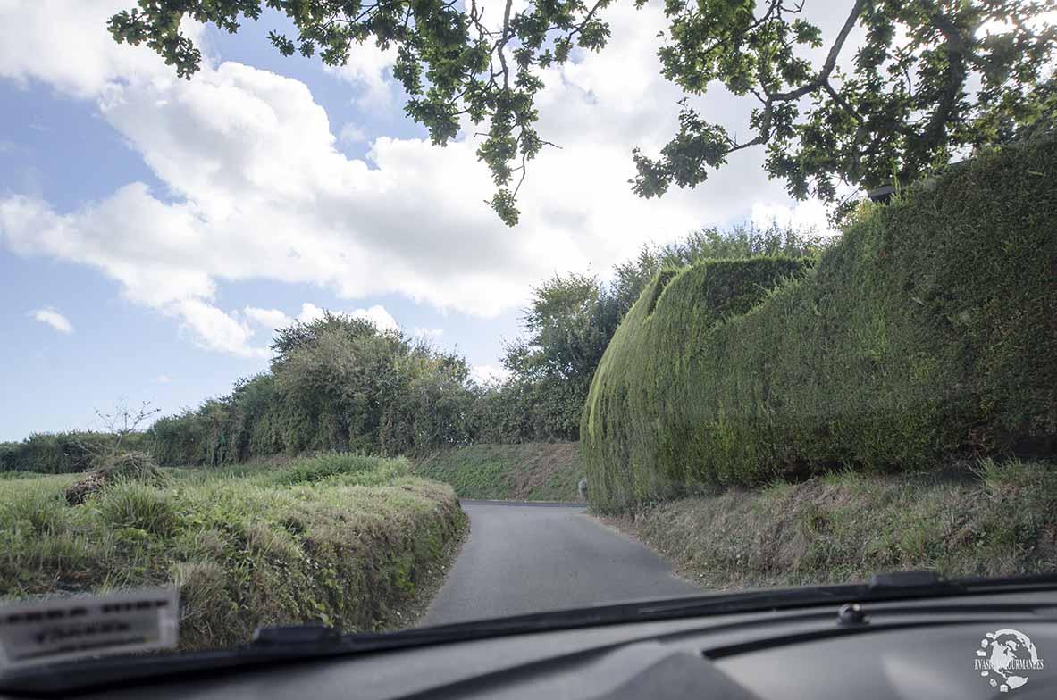 Green lane Jersey