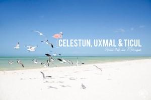 Celestun Uxmal
