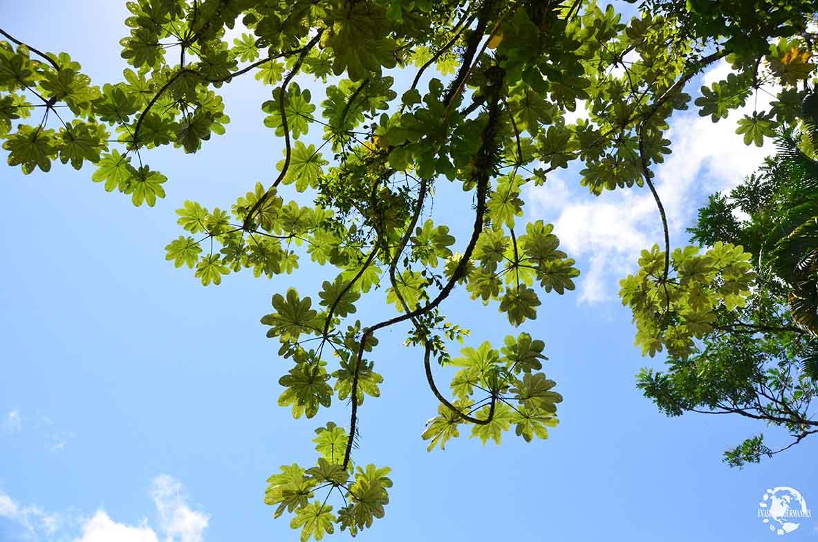 Forêt tropicale Martinique