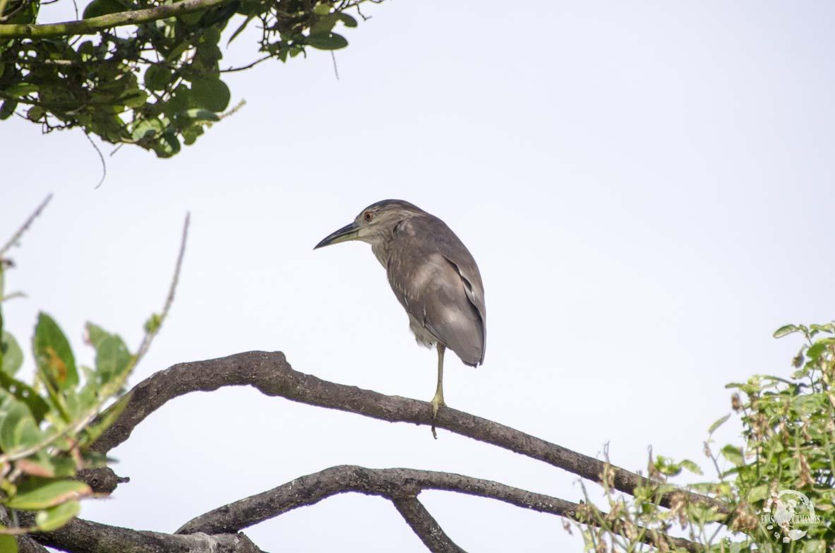 oiseau Los Haitises