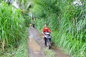 Campagne Bali