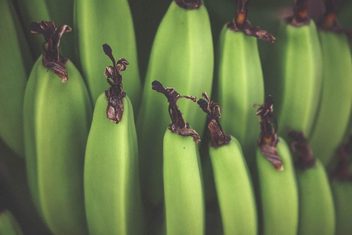 Bananes plantain