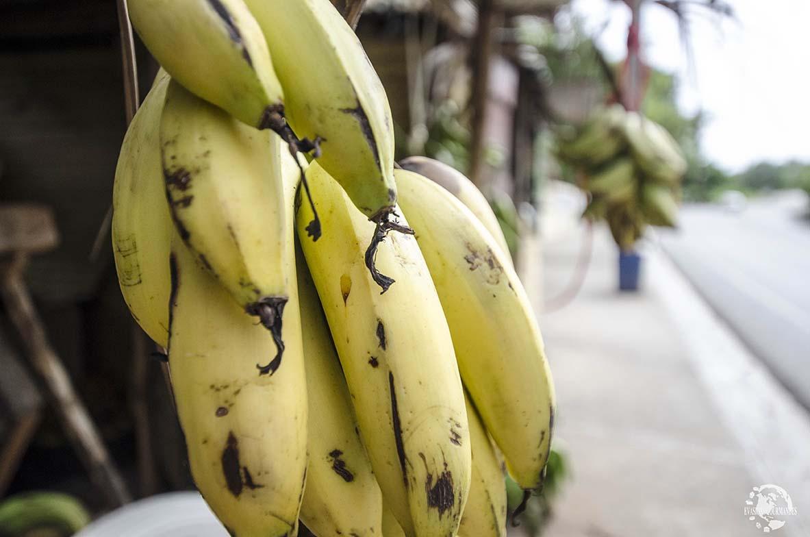 Bananes République Dominicaine