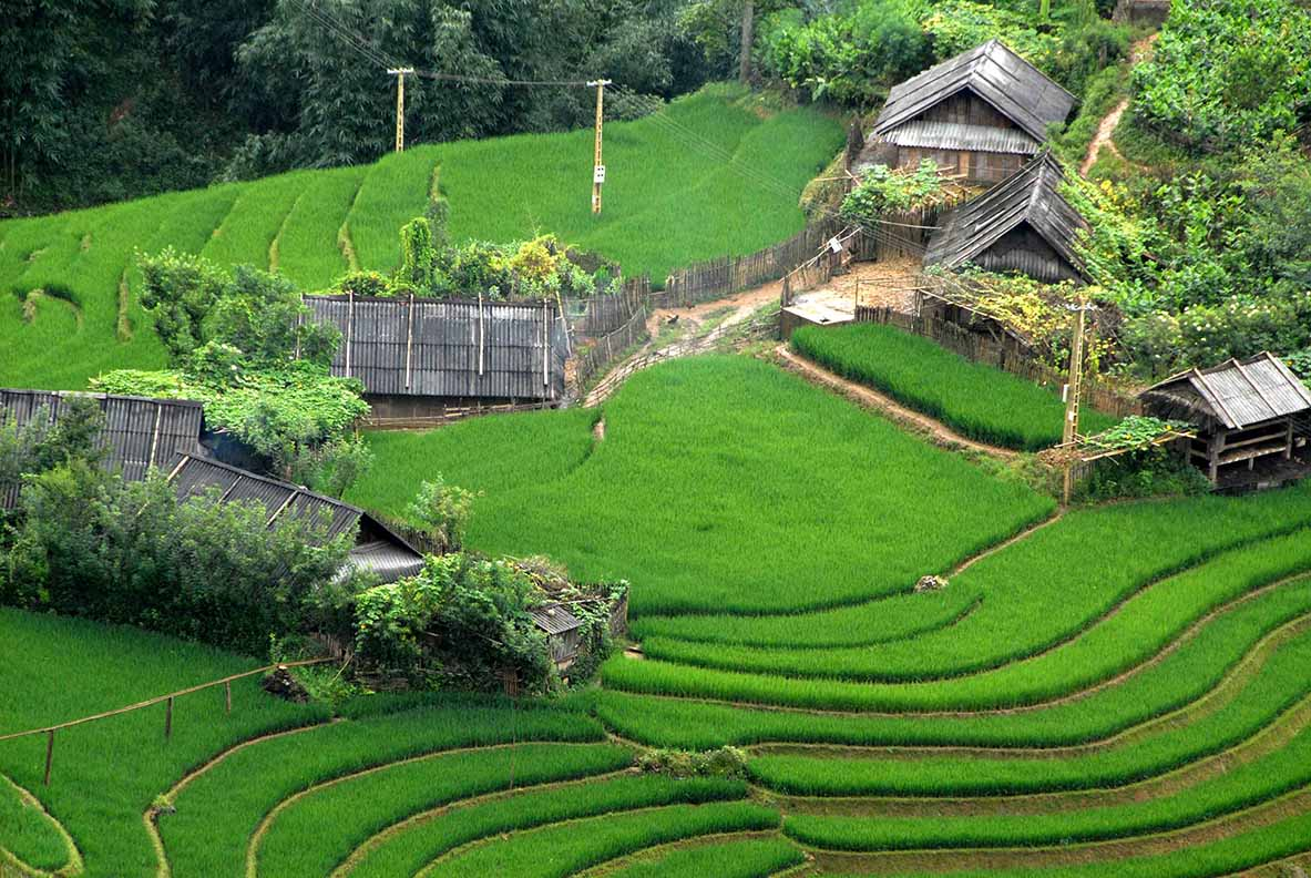 Rizières en terrasses Vietnam