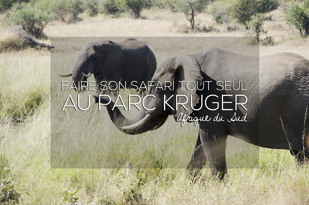 afrique du sud comment faire son safari tout seul au parc kruger. Black Bedroom Furniture Sets. Home Design Ideas