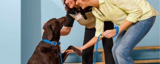 نتيجة بحث الصور عن لمحبى الكلاب دليلك لكيفية تربية الكلاب و الاعتناء بها