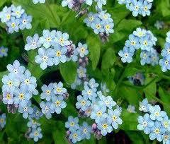 çiçek Türleri Evde Usta Var