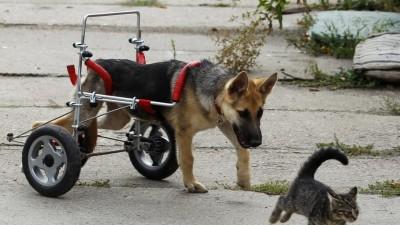 17_Futur - Les animaux handicapés retrouveront leur joie de vivre grâce à des prothèses conçues sur mesure..?!