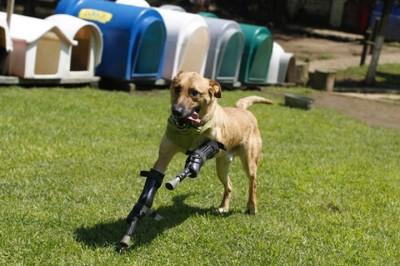 6_Futur - Les animaux handicapés retrouveront leur joie de vivre grâce à des prothèses conçues sur mesure..?!