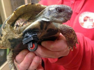 7_Futur - Les animaux handicapés retrouveront leur joie de vivre grâce à des prothèses conçues sur mesure..?!