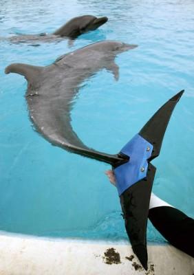 8_Futur - Les animaux handicapés retrouveront leur joie de vivre grâce à des prothèses conçues sur mesure..?!