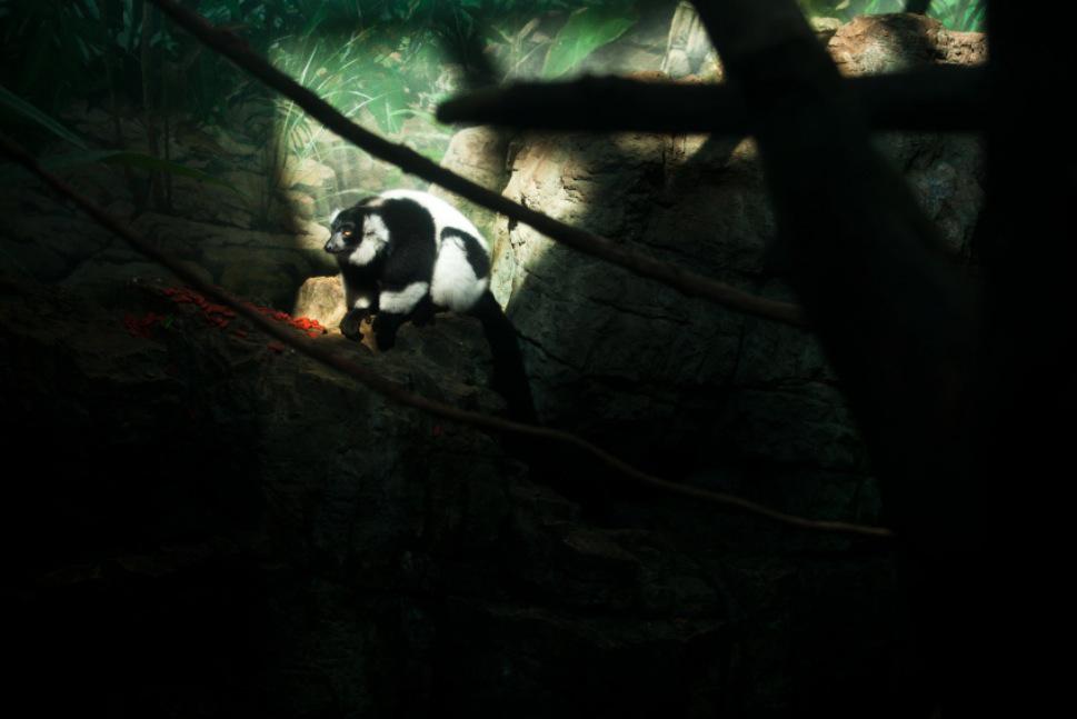 14_Animal - La souffrance des animaux de zoo capturée à travers le monde