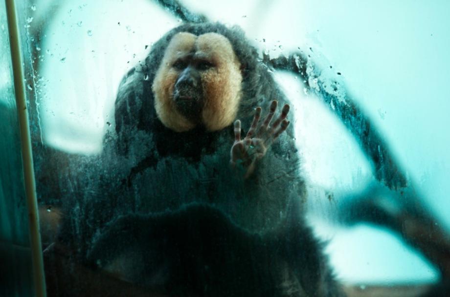 1_Animal - La souffrance des animaux de zoo capturée à travers le monde