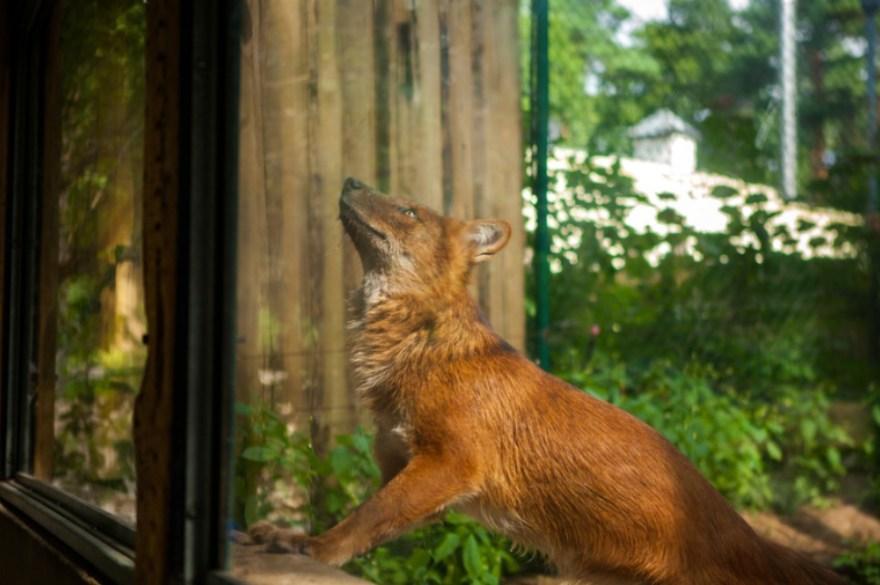 5_Animal - La souffrance des animaux de zoo capturée à travers le monde