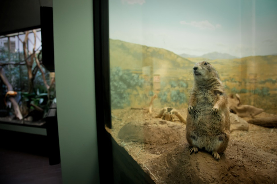 7_Animal - La souffrance des animaux de zoo capturée à travers le monde