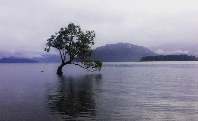 yksin matkustaminen lonely tree wanaka