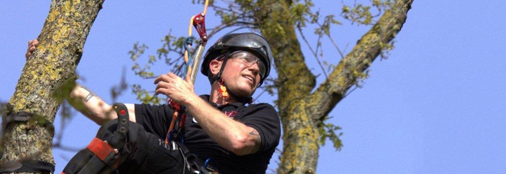 single rope technique tree climbing