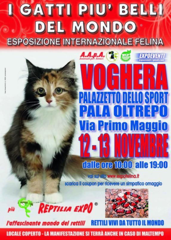 I Gatti Pi Belli Del Mondo A Voghera a Voghera  2016  PV Lombardia  eventi e sagre