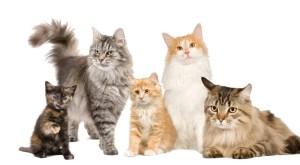 Mostra Internazionale felina Novara