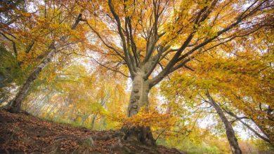 Photo of Oasi Zegna: Autunno e lo spettacolo del Foliage