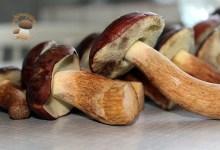 Photo of Andar per funghi in Italia. Il semaforo aggiornato