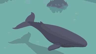 Photo of Moby Dick. Spettacolo in navigazione sul Lago Maggiore