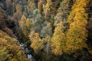 Treno del Foliage - Ferrovia Vigezzina-Centovalli - ph. Giovanni Tagini (5)