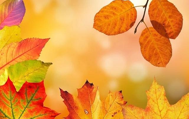 autumn-credit Pixabay