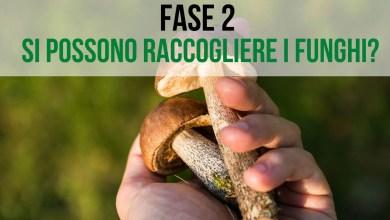 Photo of Fase 2: raccogliere funghi si può?