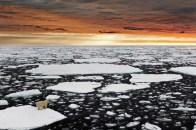 9 Marco Gaiotti, Un solitario orso polare nell'Artico