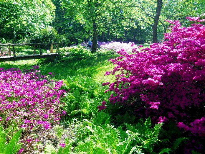 Britzer Garten,Zauberblüten , Rhododendronhain,Berlin,Freizeit,Unterhaltung