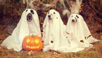 Halloween im Tierpark,Kinder,Freizeit,Unterhaltung,#VisitBerlin,#EventNes,#Halloween