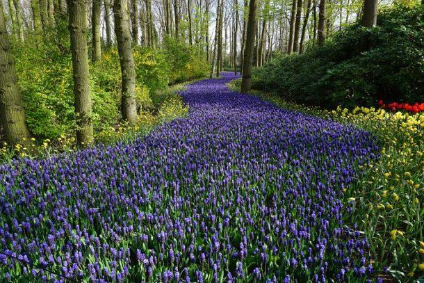 Flower Power ,Muttertag,Gärten der Welt