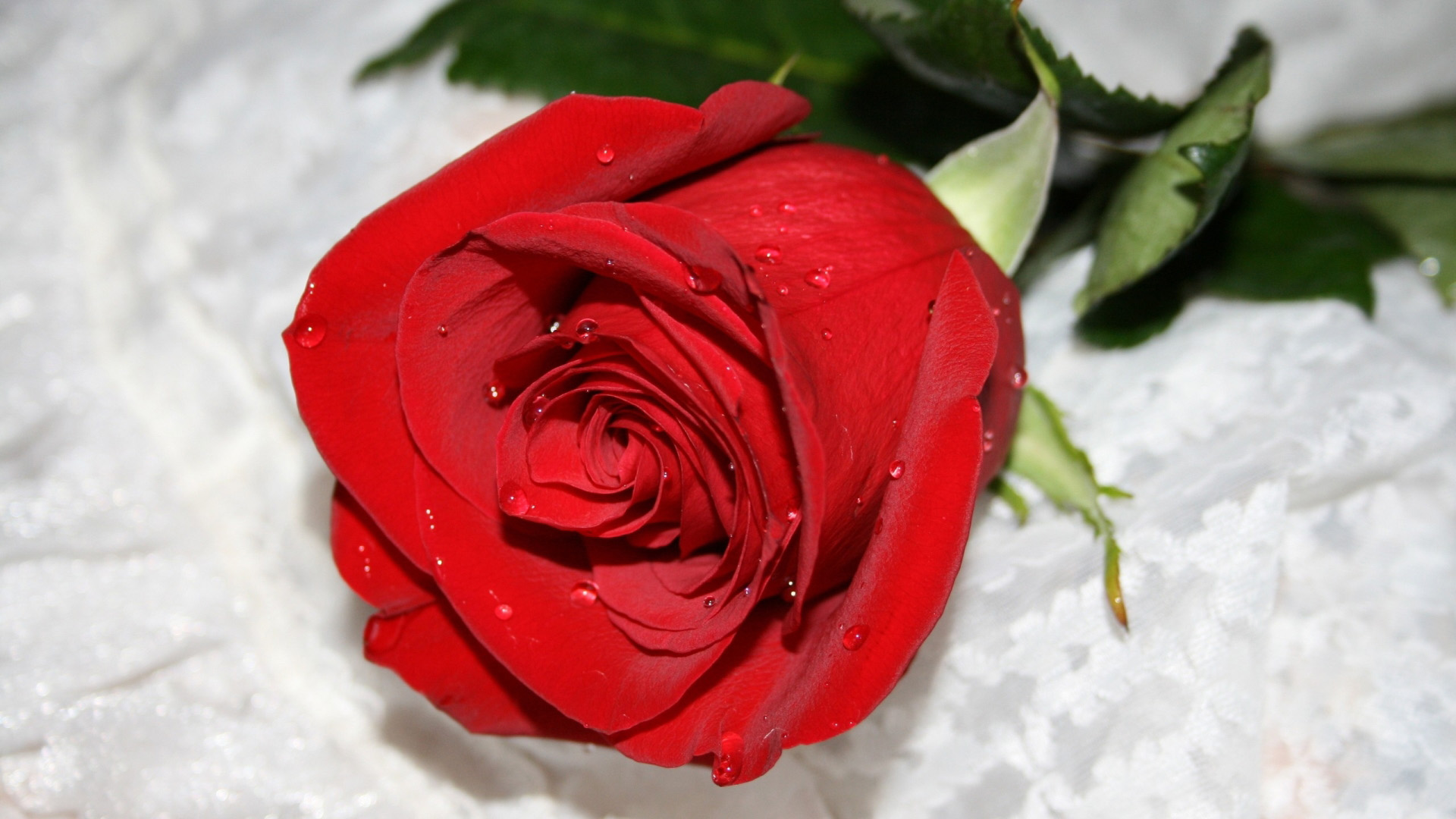 Beautiful Red Rose Images Hd Wallpapers 2017