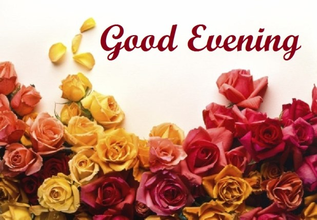100 Epic Best Good Evening With Rose Flowers Dgreetings
