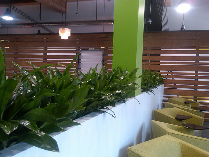 Office Plants Interior Landscape Patio Landscape San Diego to Temecula
