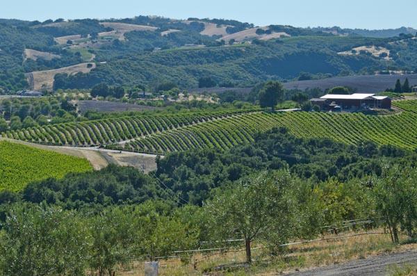 Olive Oil Tasting at Kiler Ridge Olive Oil, Paso Robles