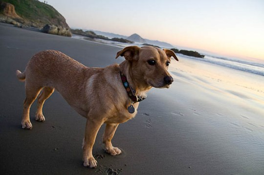 Traveling with your dog - My dog at Morro Beach