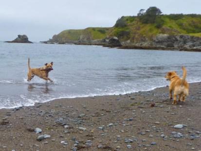 noyo off leash dog beach fort bragg