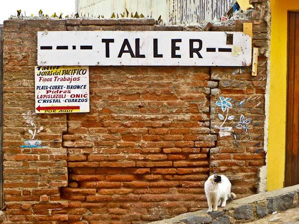 valparaiso-chile-cat