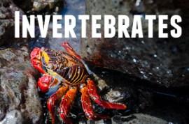 Guide to Galapagos Invertebrates
