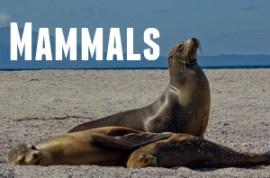 Guide to Galapagos Mammals